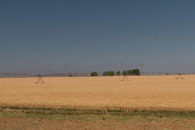 pakhouse-crop-estimate