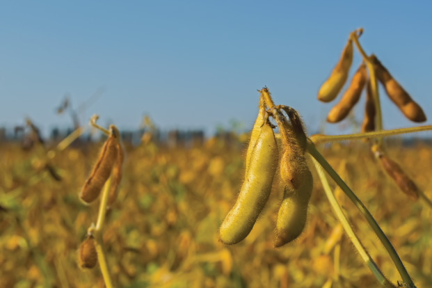 Pakhouse-genetically-modified-crops-africa