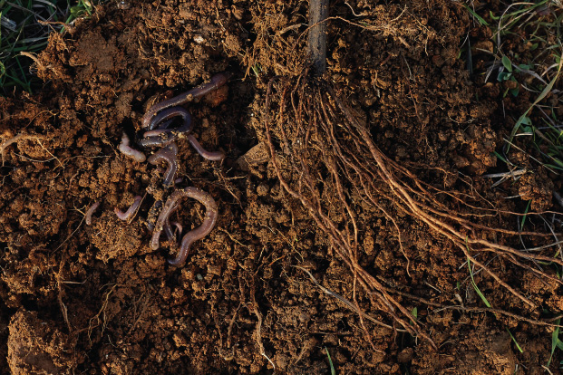pakhouse-earthworms improve soil quality